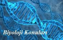 2020 TYT Biyoloji Konuları ve Soru Dağılımı(ÖSYM-YÖK-MEB)