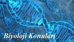 2018 TYT Biyoloji Konuları ve Soru Dağılımı(ÖSYM-YÖK-MEB)