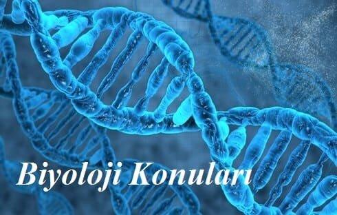 2019 TYT Biyoloji Konuları ve Soru Dağılımı(ÖSYM-YÖK-MEB)